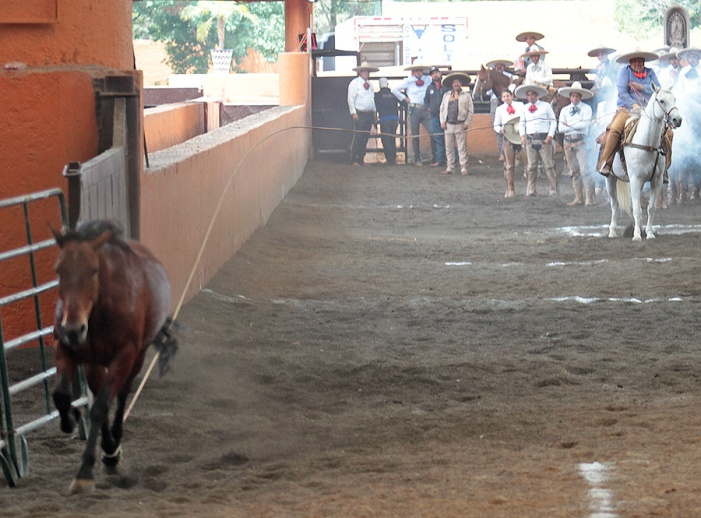 Juan Manuel Palomino chorreó este pial de cuenta, de 18 unidades, por Rancho La Necedad de Puebla